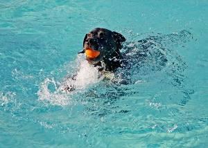 petit chien nage